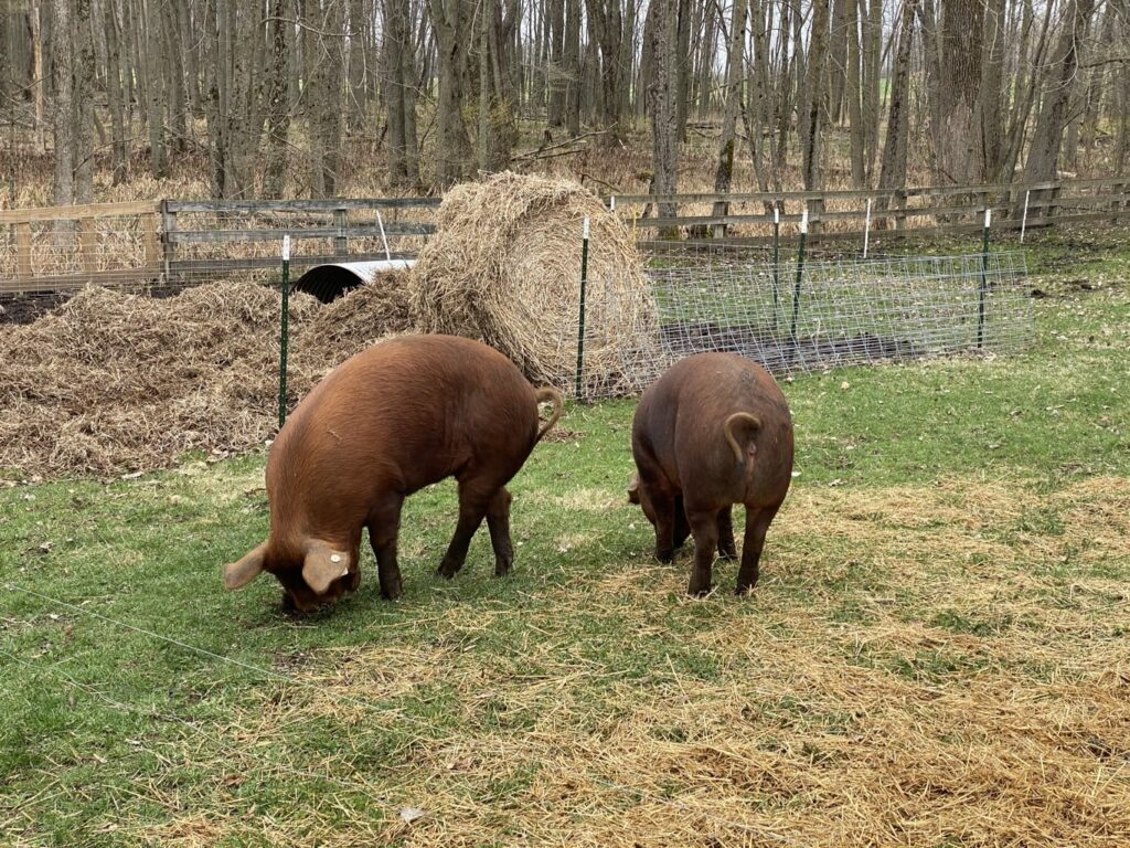 butler creek farm -IMG_3849