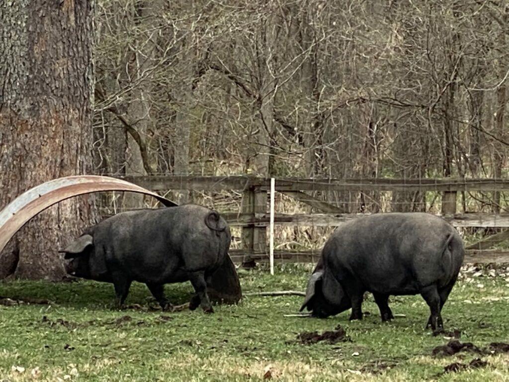 butler creek farm -IMG_3899