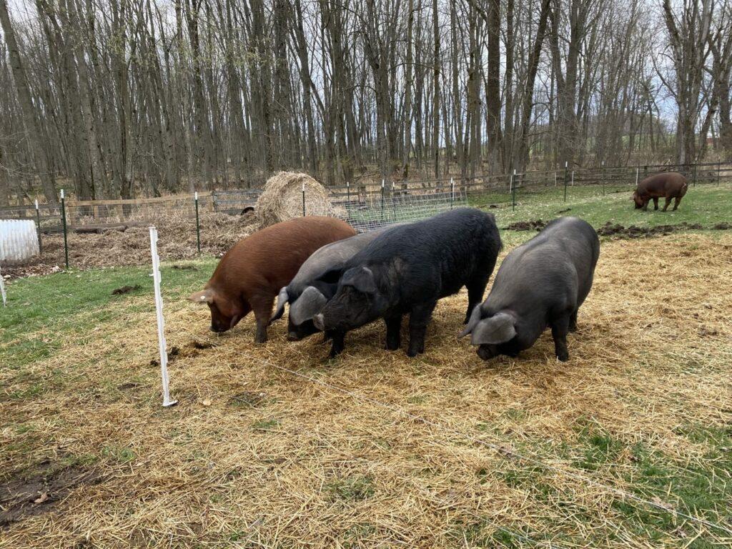 butler creek farm -IMG_3906
