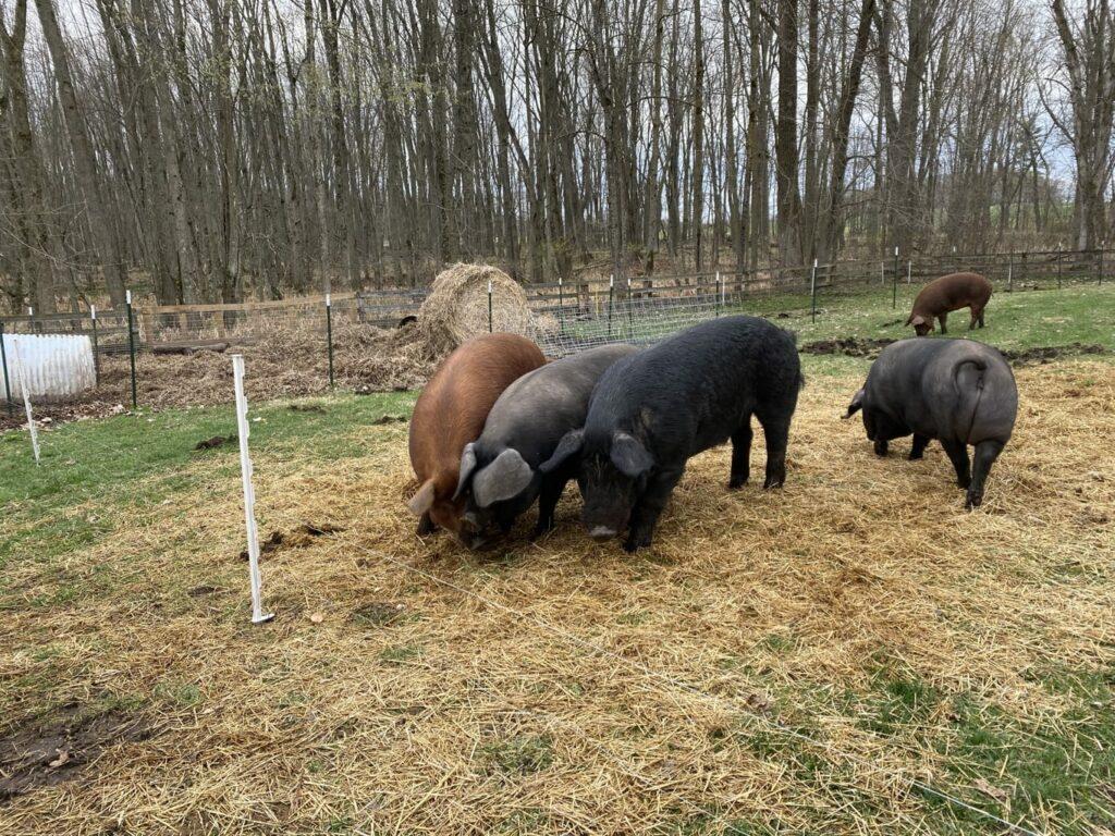 butler creek farm -IMG_3907