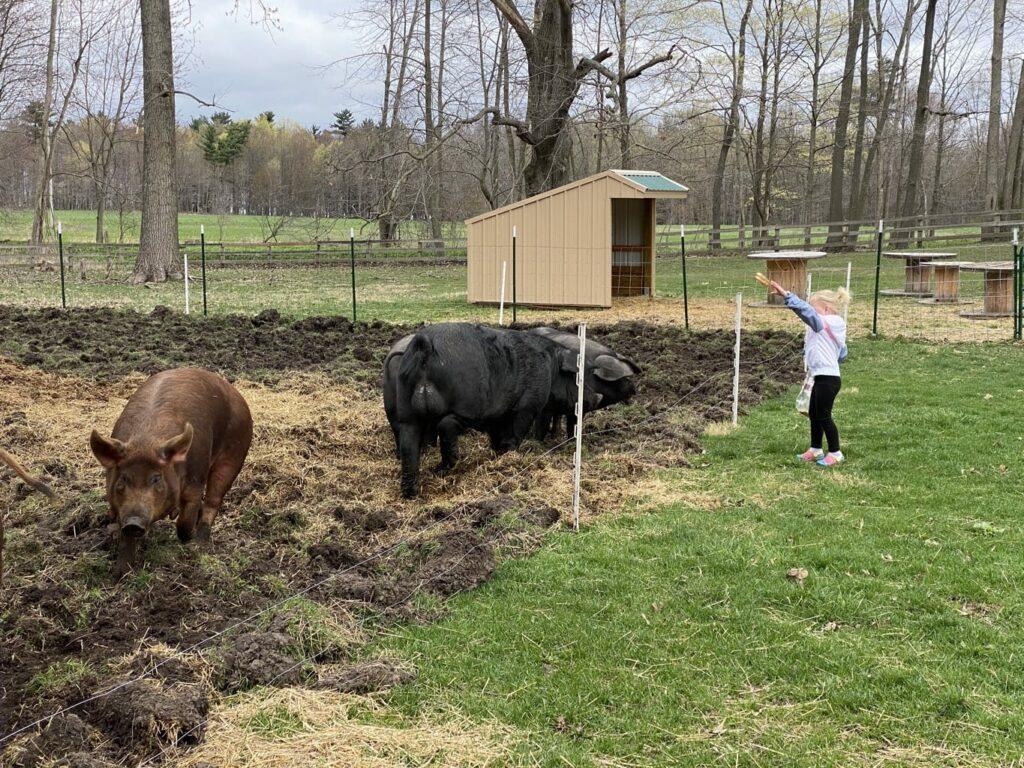 butler creek farm -IMG_3973