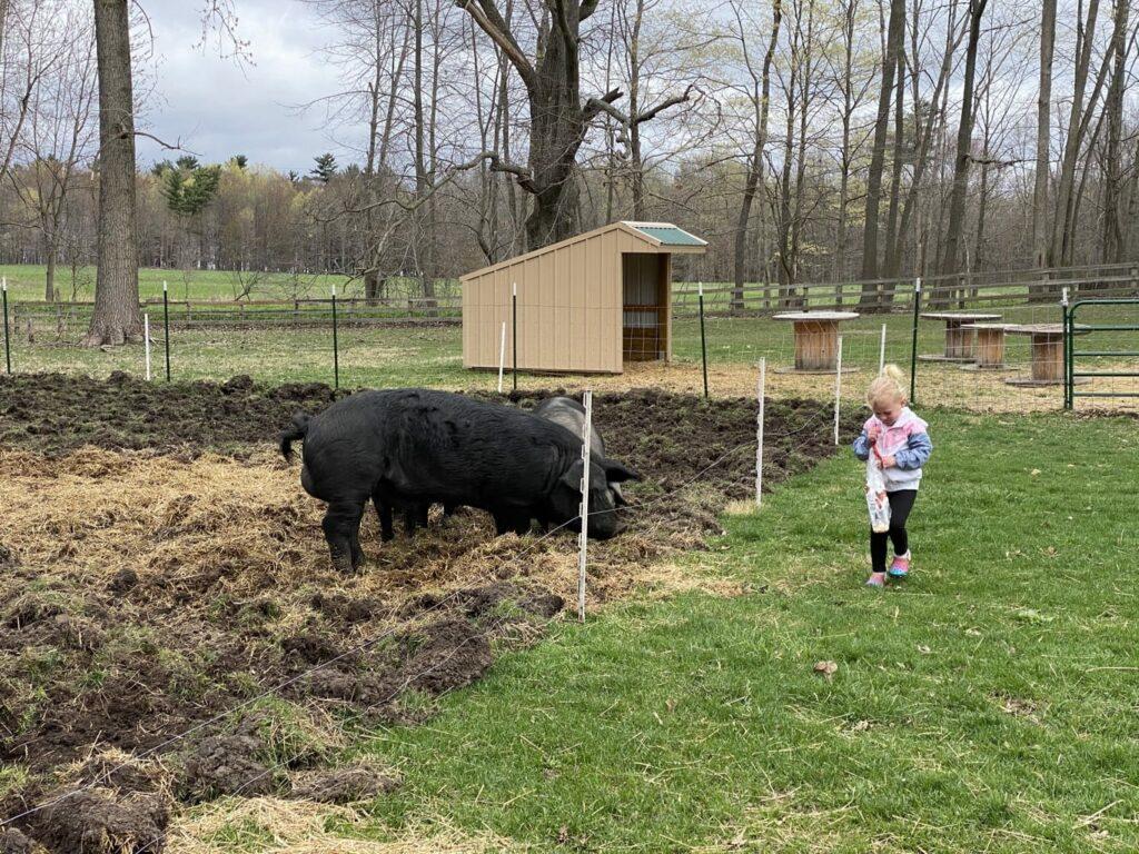 butler creek farm -IMG_3976